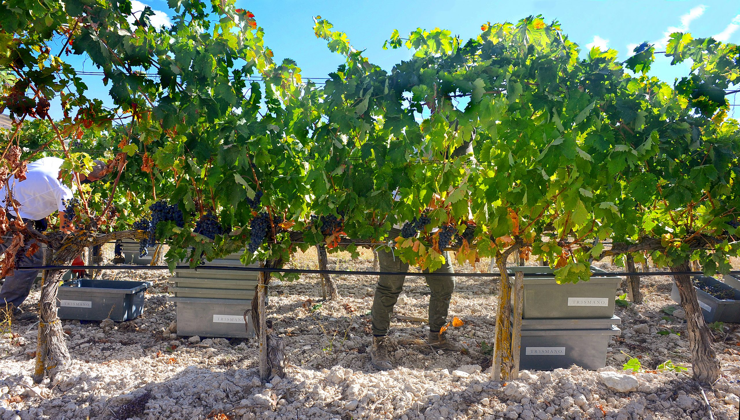 Single Vineyard Club Milla