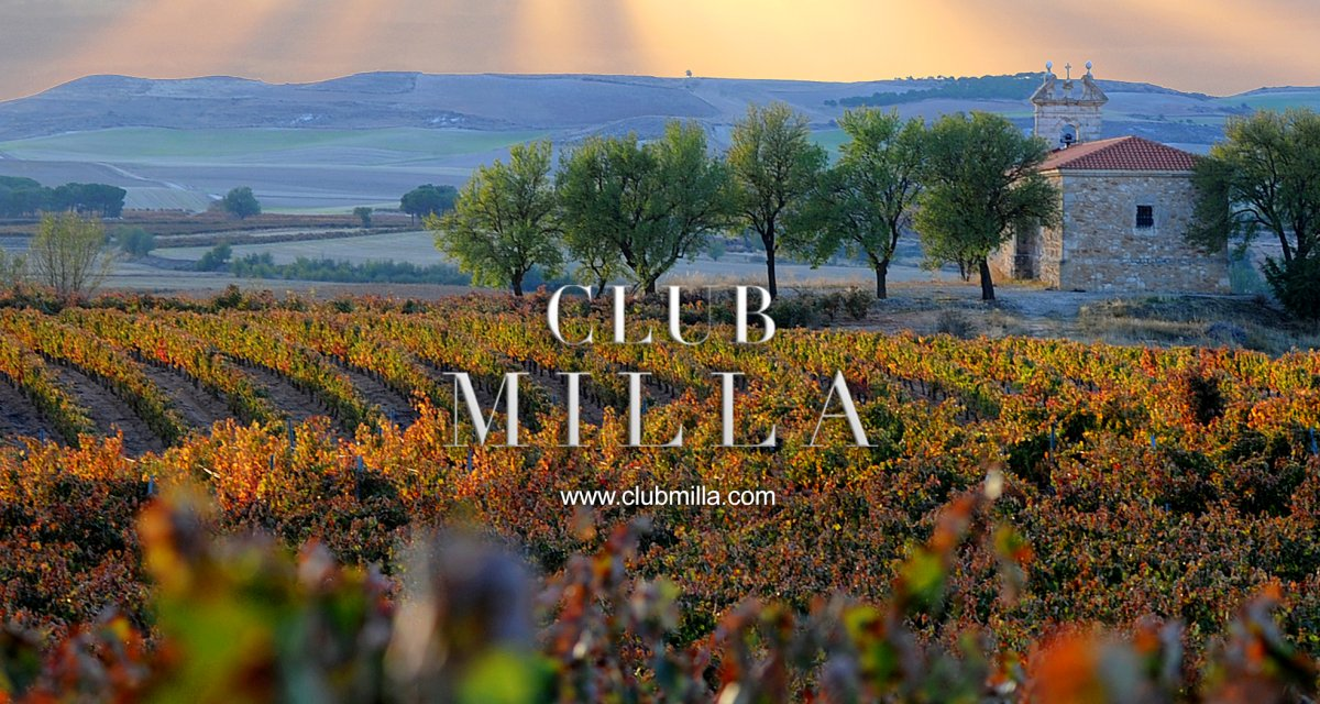 ¿Qué es un vino Single Vineyard?